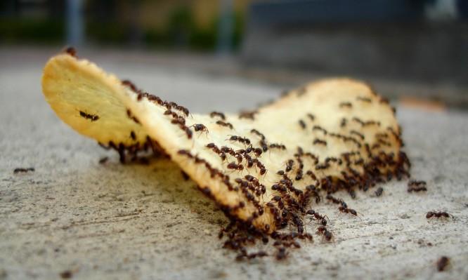 http://www.iatropedia.gr/wp-content/uploads/2015/10/ants-666x399.jpg