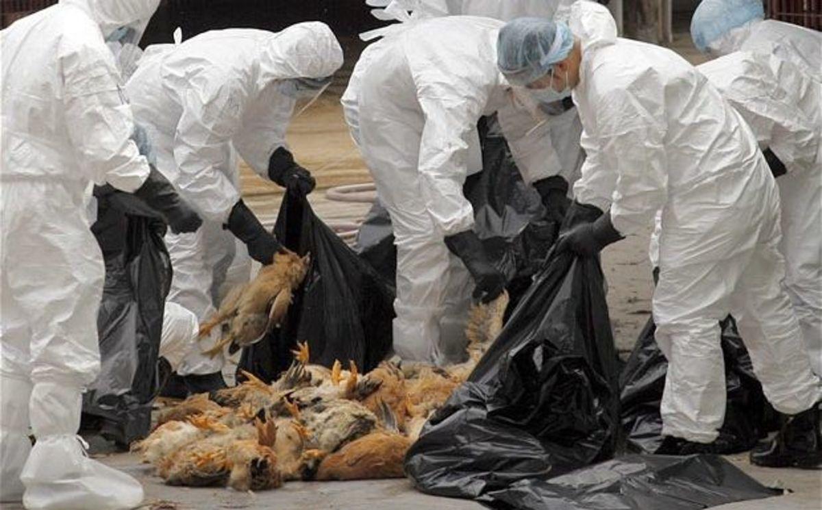 Αποτέλεσμα εικόνας για γρίπης των πτηνών