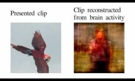 ΑΠΙΣΤΕΥΤΟ ΒΙΝΤΕΟ: δείτε πως εκλαμβάνει ο εγκέφαλος μας τις εικόνες γύρω του