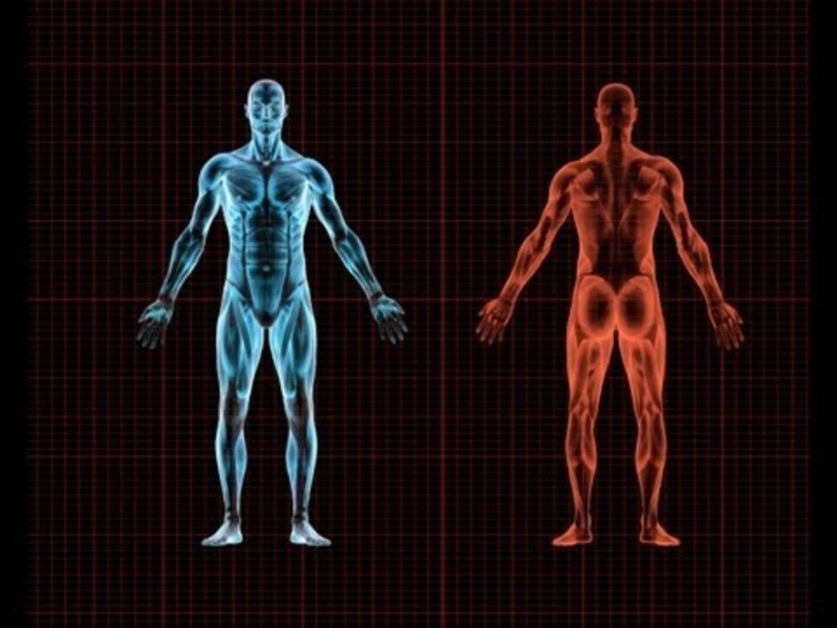 Δέκα μέρη του σώματός σας τα οποία ΔΕΝ τα χρειάζεστε! (ΒΙΝΤΕΟ)