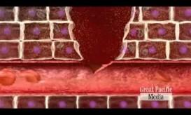 Δείτε σε ένα υπέροχο βίντεο πως λειτουργεί το ανοσοποιητικό μας σύστημα