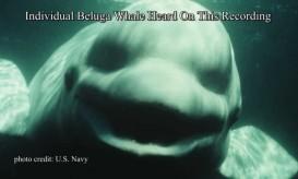 Οι φάλαινες μιλούν και οι άνθρωποι καταλαβαίνουν.-ΑΚΟΥΣΤΕ το σπάνιο ντοκουμέντο
