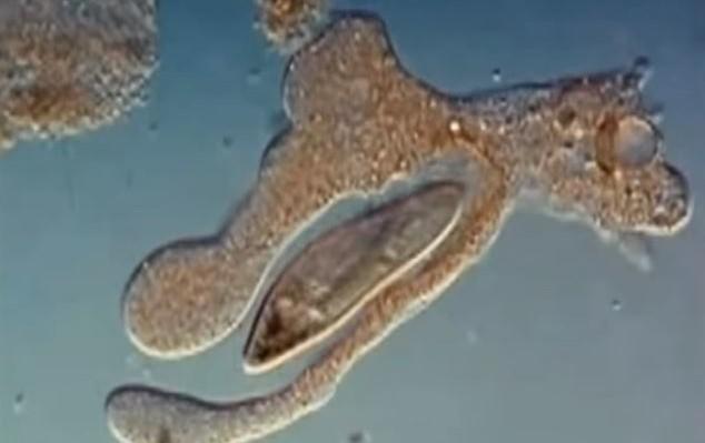 λευκά αιμοσφαίρια