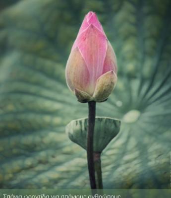 novartis flower
