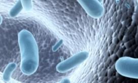 μικροβιωμα