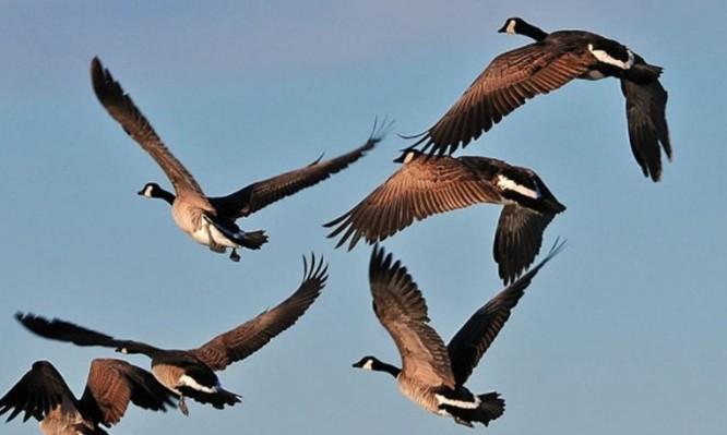 πουλια πετουν