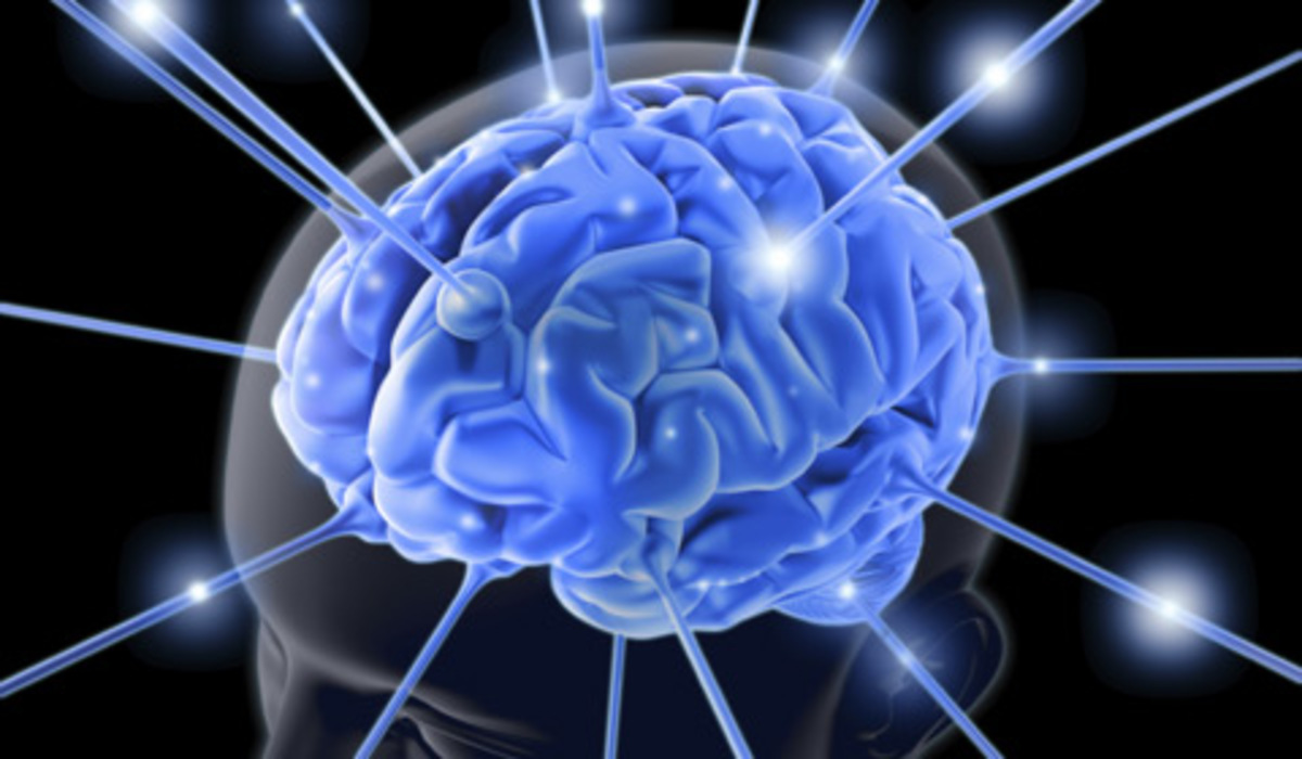 72977-brain