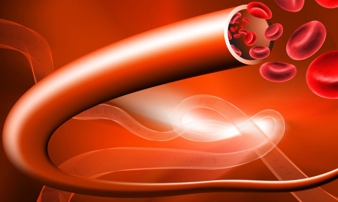 αιμοφόρα αγγεία