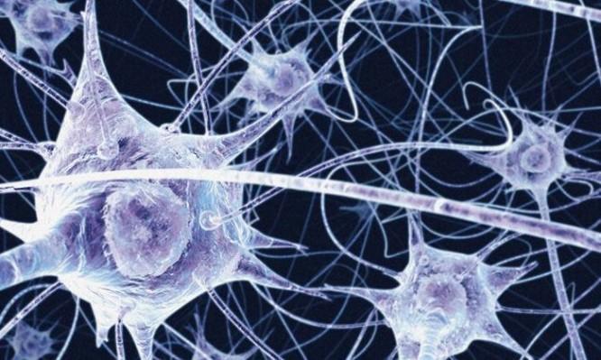 neyroanasologia