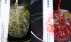 σπανάκι