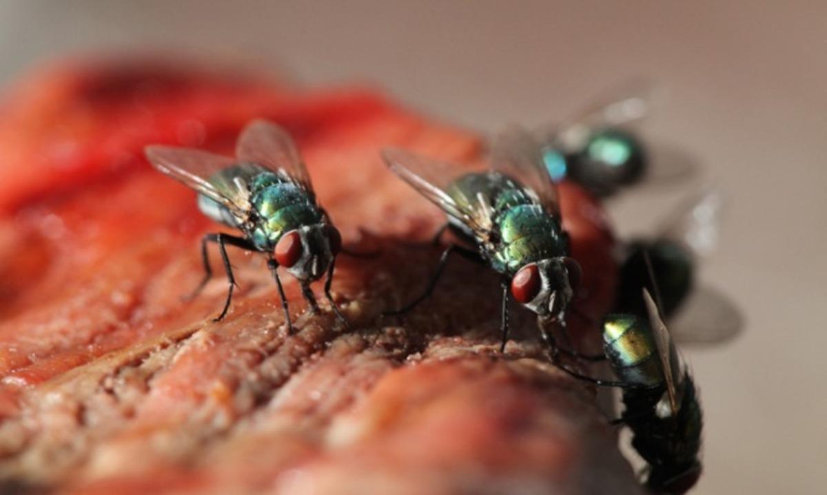 μύγες
