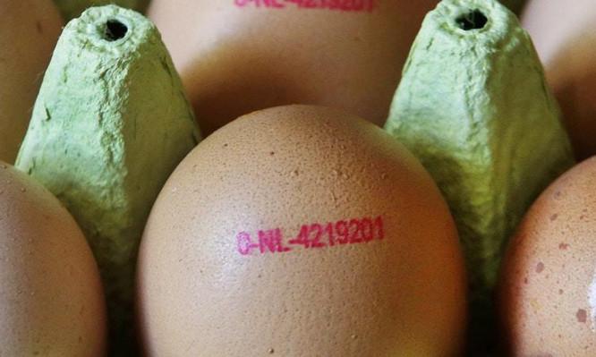 μολυσμένα αυγά