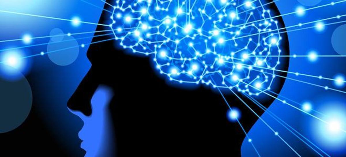 brain-neww-660