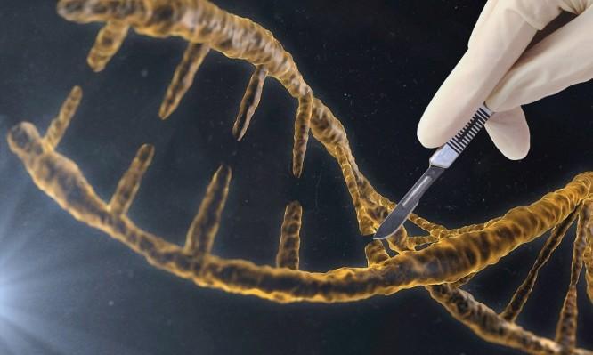 γενετική τροποποίηση