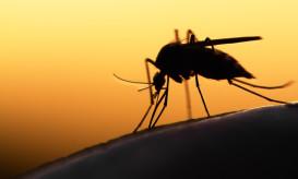 ελονοσία