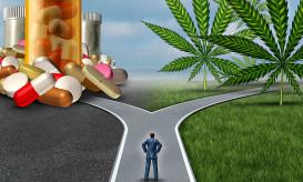 medical-cannabis-MMJ-MXC