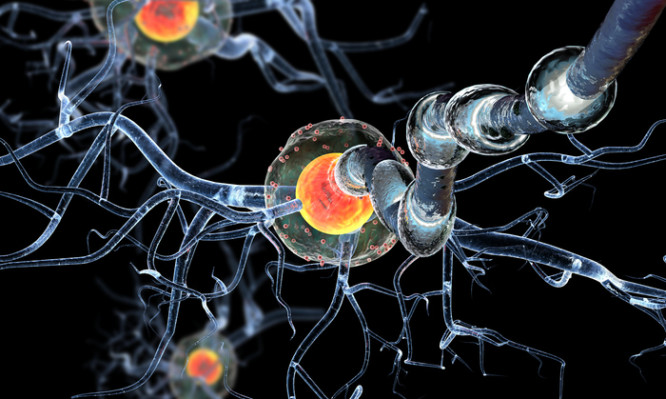 High quality 3d render of nerve cells,isolated on black background, concept for Neurologic Diseases, tumors and brain surgery.