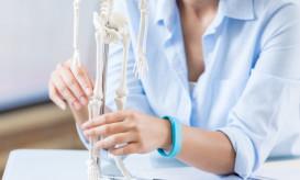 Unrecognizable female healthcare professional studies a human skeleton model.
