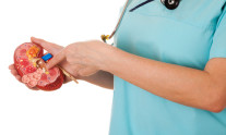 Nurse in scrub holding a model of human kidney and pointing her finger to kidney tumor. White background.