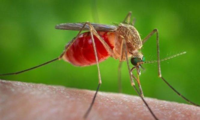 ιός Δυτικού Νείλου