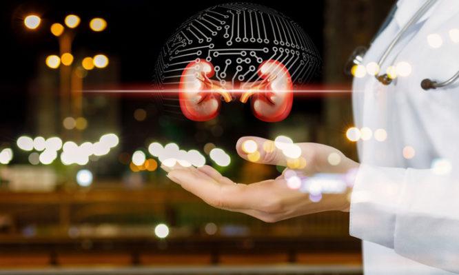 νεφροί