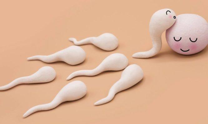 σπέρμα