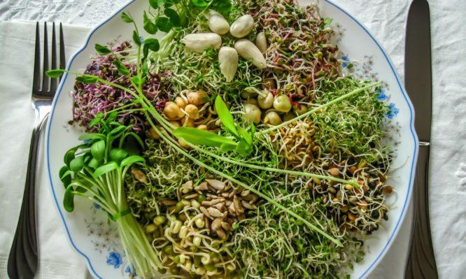 φύτρες λαχανικών